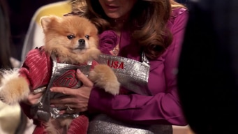 gordon gives lisa vanderpump's dog a special apron tile image